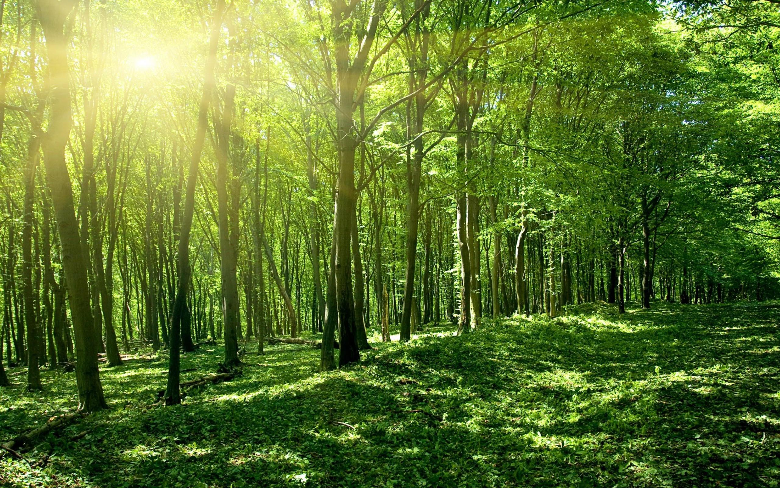 Фотка в лесу 7 фотография